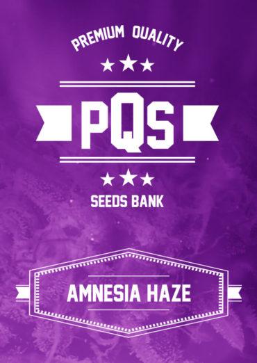 Amensia Haze