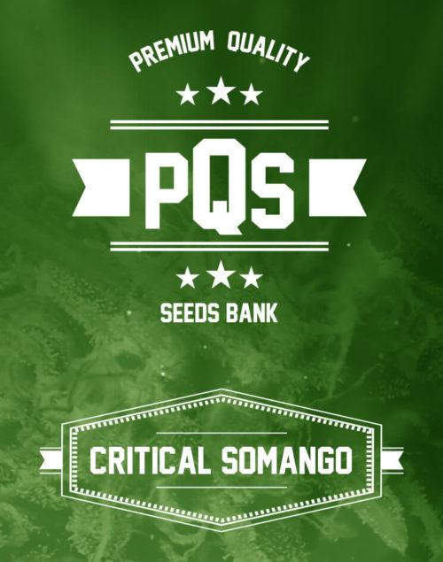 Critical Somango