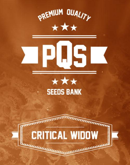 Critical Widow