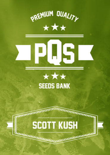 Scott Kush